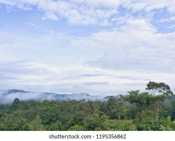jungel scape background, Tropical forest, misty mountain scenery