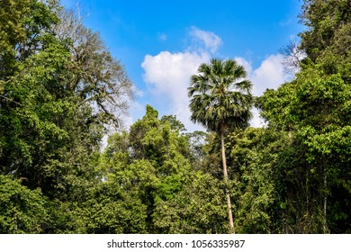 Jungel in Thailand: rich and colorful flora of Khao Yai National Park