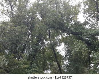 Jungel Trees Jumanji