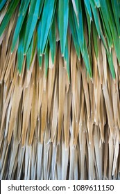 Jungle background of bright green palm fronds overlaying layer of brown dry leaves