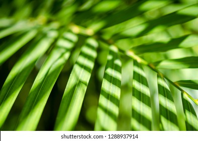 Jungle background of bright green palm fronds casting shadows in tropical sun