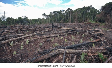 Jungle burned happen every year nearby Sarawak and Kalimantan.