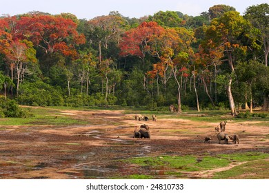 Jungle Elephants in a clearing