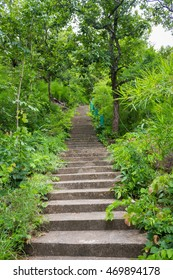 Jungle, forest path, mud steps with wood