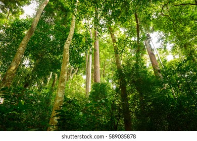 Jungle forest with tropical tree at the Khao Phra Thaeo, Phuket, Thailand