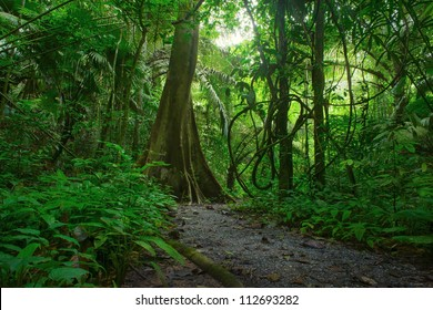 Jungle forest. Tropical trees in Asia. Beautiful adventure nature landscape background with hike road in deep rain forest of Thailand