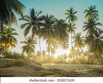 jungle full of Palm trees at the beach