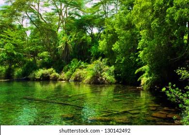 Jungle, green bush and water spring in Africa. Tsavo West, Kenya
