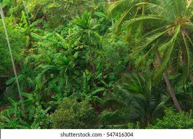Jungle greenery and good scenery from the top looking down onto palm trees and exotic plants.