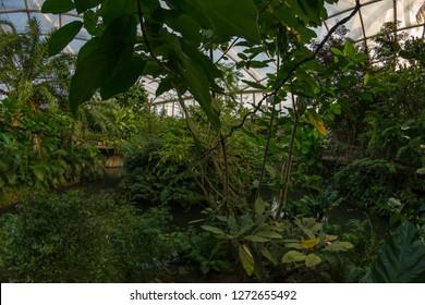 Jungle in a greenhouse