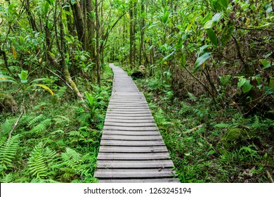 Jungle hike on boardwalk along Pipiwai Trail in Maui, Hawaii