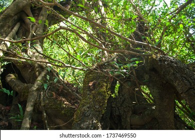 Tangled Vegetation Images Stock Photos Vectors Shutterstock