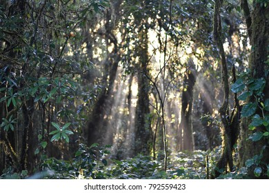 Jungle landscape.The forest with sun beam and fog at Intanon nation park,Chiang Mai,Thailand.