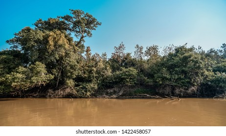 Jungle landscape on the cuaiaba riverbank, Pantanal,Brazil