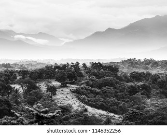Jungle landscape scenic with mountains on the horizon in Chiapas, Mexico in black and white