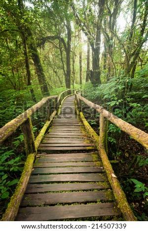hot sale online c9dab 2449c Jungle landscape. Wooden bridge at misty tropical rain forest. Travel  background at Doi Inthanon