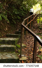 Jungle in Malaysia on a hiking trail at Georgetown Penang to monkey beach with stairs and beautiful trees
