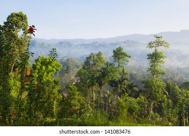Jungle in misty morning, Sinharaja rainforest, Sri Lanka
