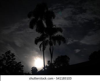 Jungle moon at night long exposure
