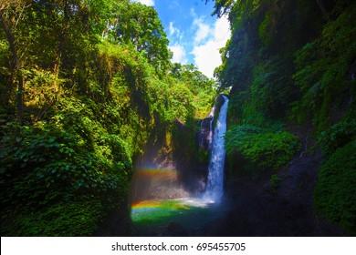 Jungle near Aling Aling waterfall, Bali, Indonesia