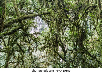 Jungle near Catarata de Gocta, one of the highest waterfalls in the world, northern Peru.