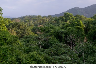 Jungle in northern Colombia