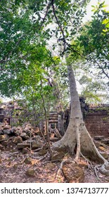 Jungle overgrown in ruins of Preak Khan temple in Angkor Complex in Cambodia.