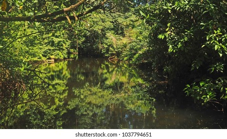 Jungle overhand reflects on a slow moving stream as it enters the Caribbean on the coast of Panama