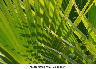 Jungle, palm leaves, Spain