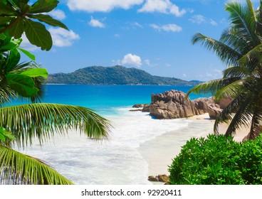 Jungle Palms Panorama