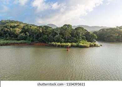 Jungle of the Panama Canal.