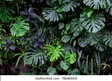 Jungle plant wall
