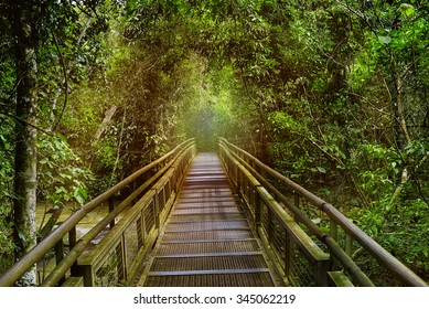Jungle rainforest,tropic forest with fern and lush vegetation, nature trail at the Argentina side of Iguazu Falls