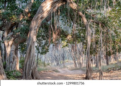 Jungle in Ranthambore National Park in Rajasthan, India