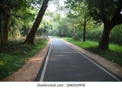 Jungle road to Sigiriya,Sri Lanka