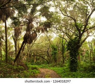 Jungle Road through Thick Florida Tropical Forest
