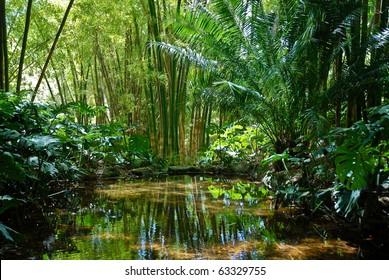 Jungle Scenery 2