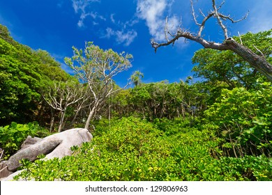 Jungle scenery of Similan islands, Thailand