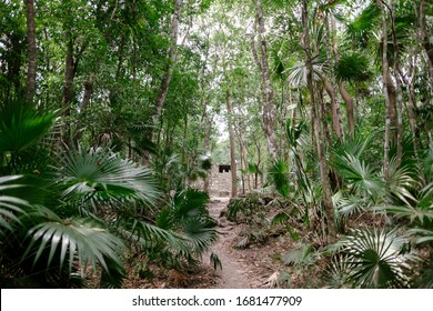 The jungle of the Sian Ka'an National Reserve in Mexico in the state of Quintana Too which is a Unesco World Heritage Site