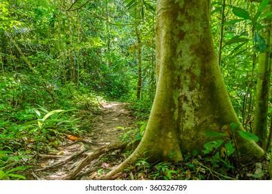Jungle in Taman Negara