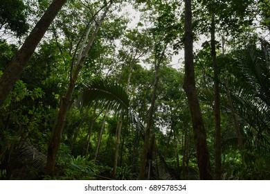 Jungle of Tioman island in Malaysia. Wild asian flora