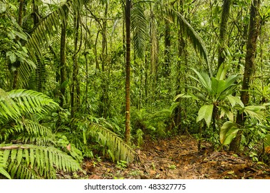 Jungle trail, Equinas Rain Forest, Costa Rica