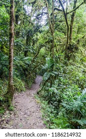 Jungle trail leading to Catarata de Gocta, one of the highest waterfalls in the world, northern Peru.