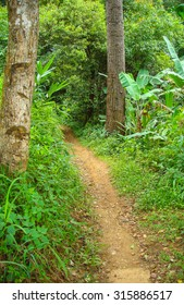 The jungle trail in thailand