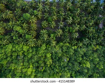 Jungle trees aerial view