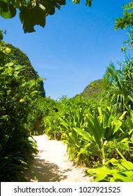 Jungle Trekking Paradise Scene