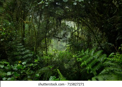 Jungle Tunnel