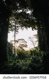 jungle in Uganda africa