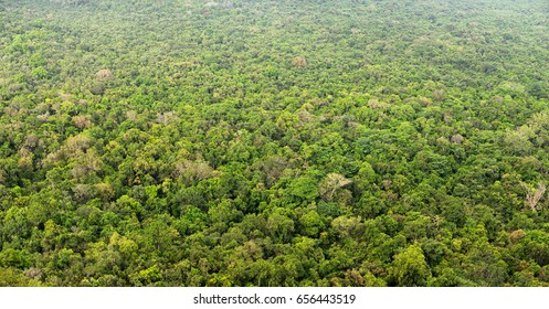 Jungle, view from above. Top view of forest