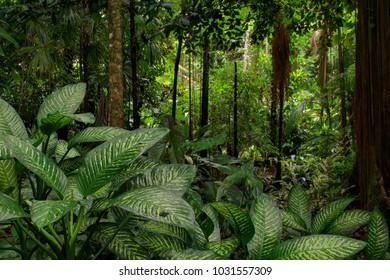Jungle view, Far North Queensland, Australia